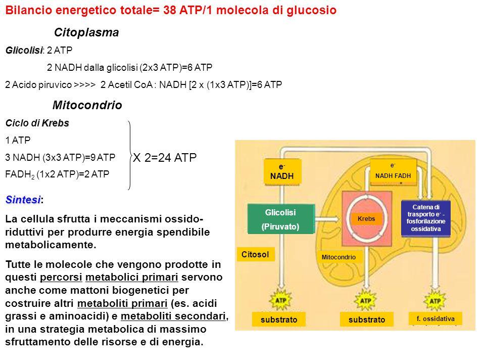 Catena di trasporto e- -fosforilazione ossidativa