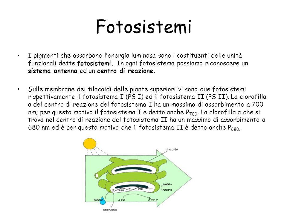Fotosistemi