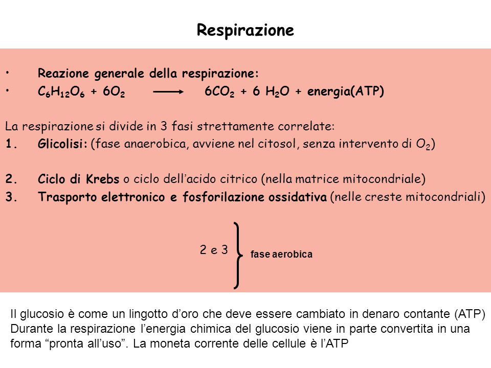 Respirazione Reazione generale della respirazione: