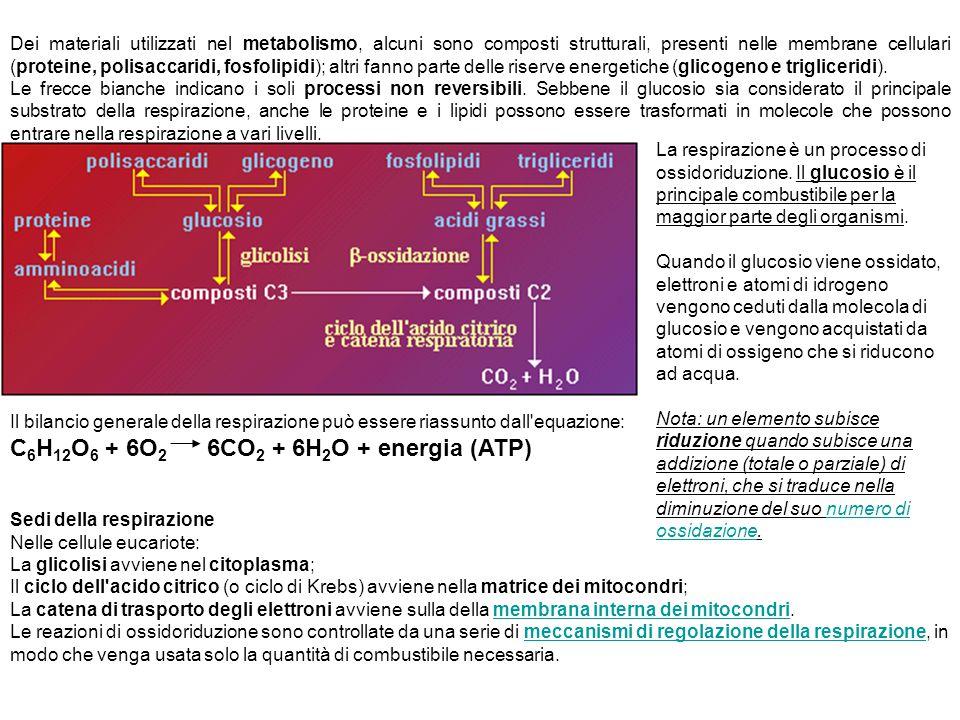 C6H12O6 + 6O2 6CO2 + 6H2O + energia (ATP)