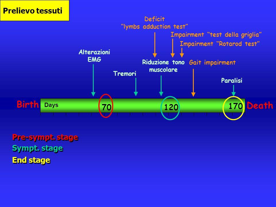 lymbs adduction test Riduzione tono muscolare