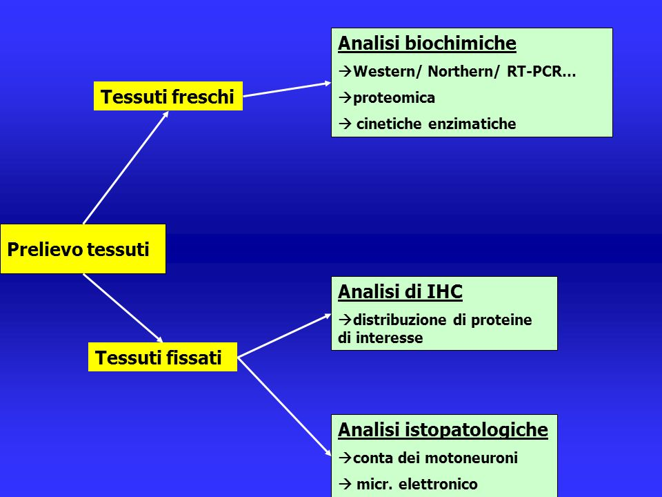 Analisi istopatologiche Analisi di IHC
