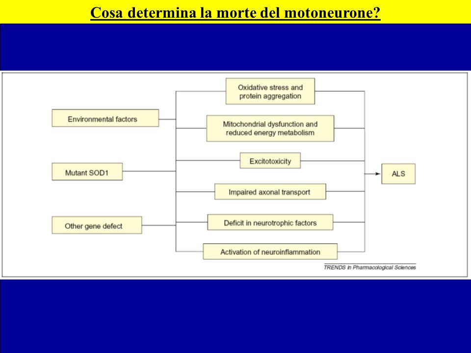 Cosa determina la morte del motoneurone