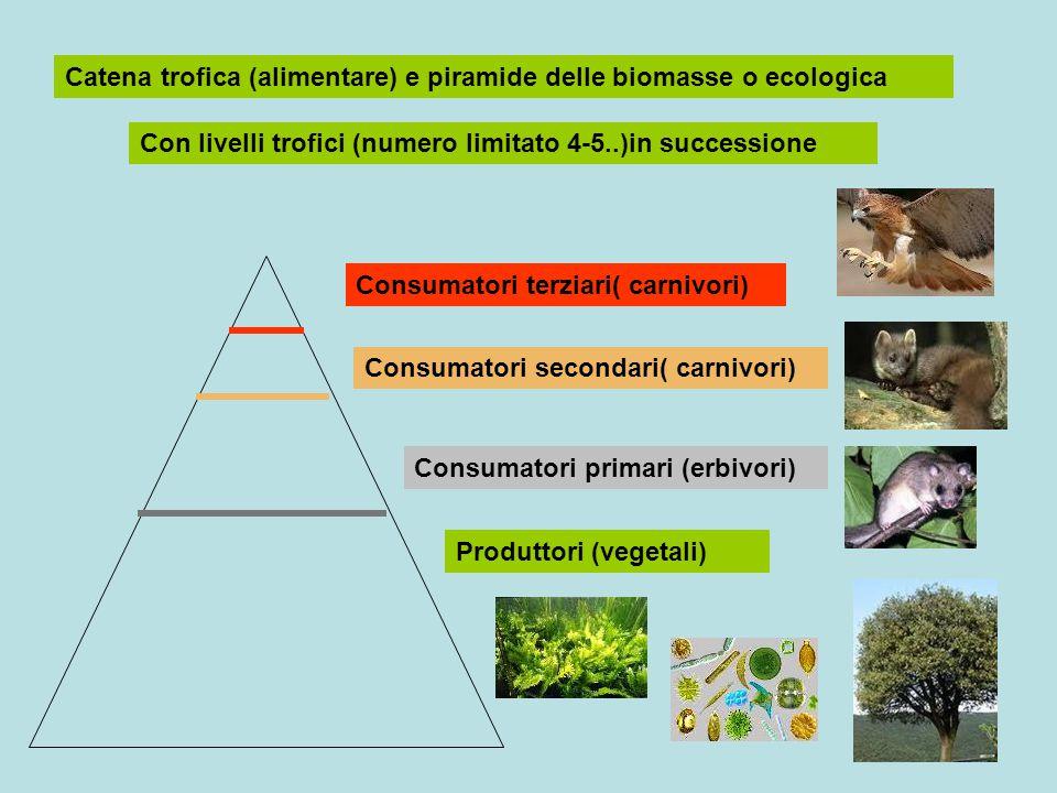Catena trofica (alimentare) e piramide delle biomasse o ecologica