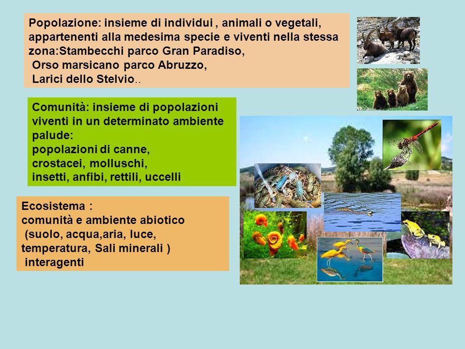 Popolazione: insieme di individui , animali o vegetali, appartenenti alla medesima specie e viventi nella stessa zona:Stambecchi parco Gran Paradiso, Orso marsicano parco Abruzzo, Larici dello Stelvio..