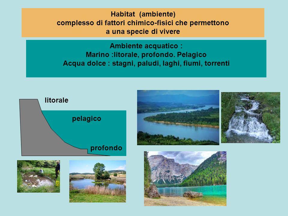 Habitat (ambiente) complesso di fattori chimico-fisici che permettono a una specie di vivere