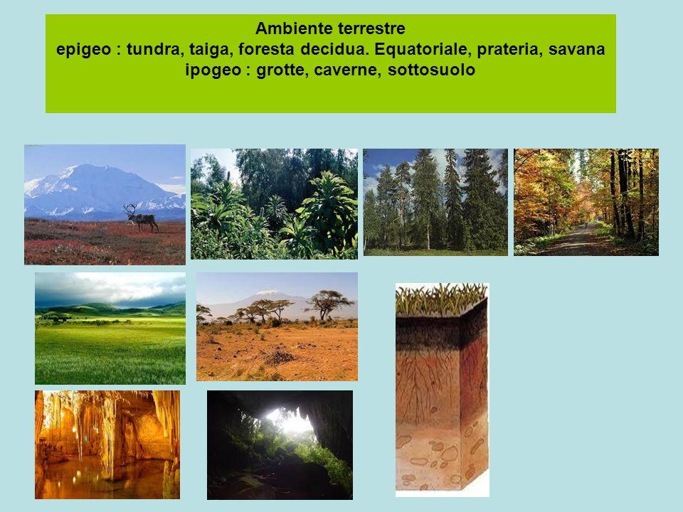 Ambiente terrestre epigeo : tundra, taiga, foresta decidua