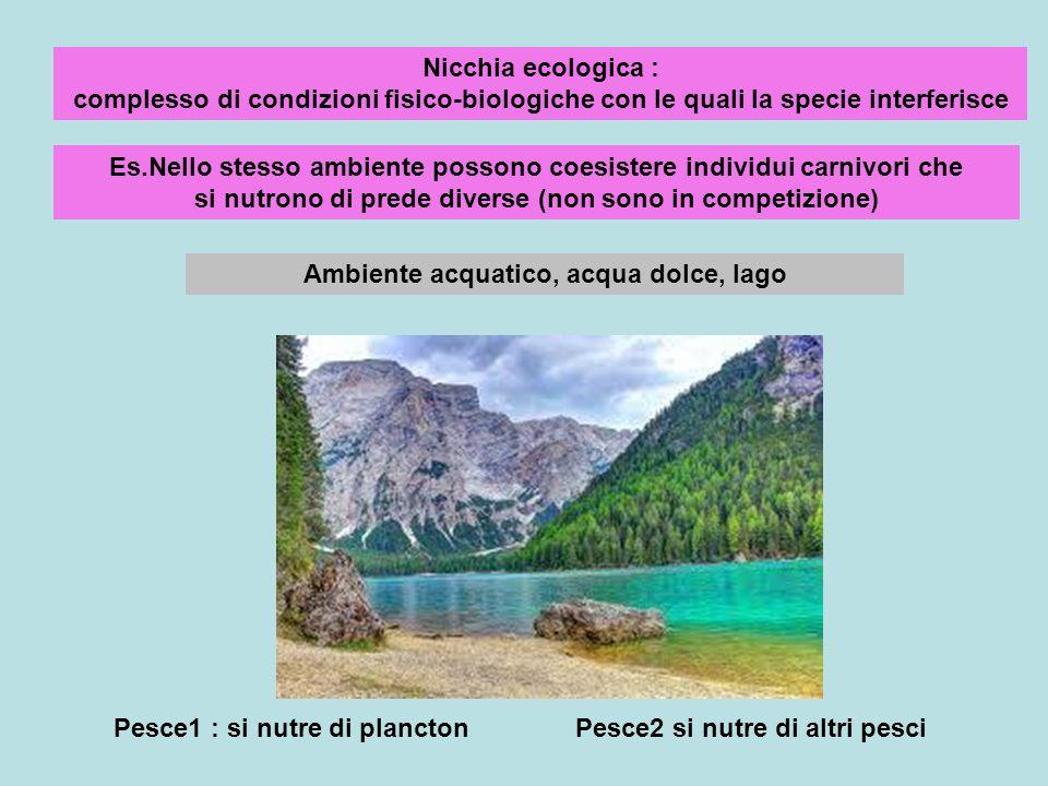Ambiente acquatico, acqua dolce, lago