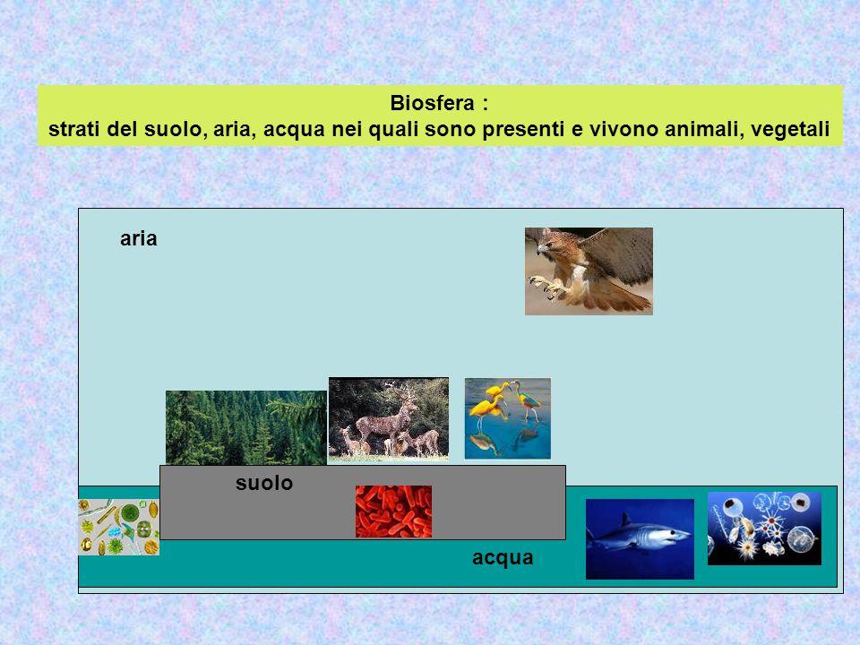 Biosfera : strati del suolo, aria, acqua nei quali sono presenti e vivono animali, vegetali
