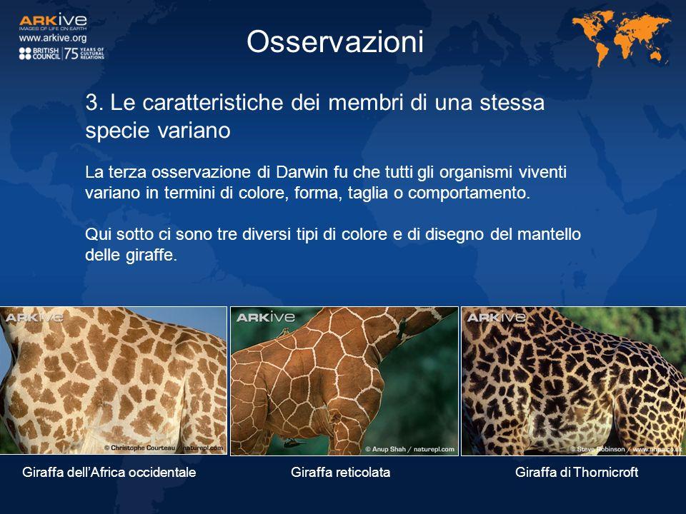 Osservazioni 3. Le caratteristiche dei membri di una stessa specie variano.
