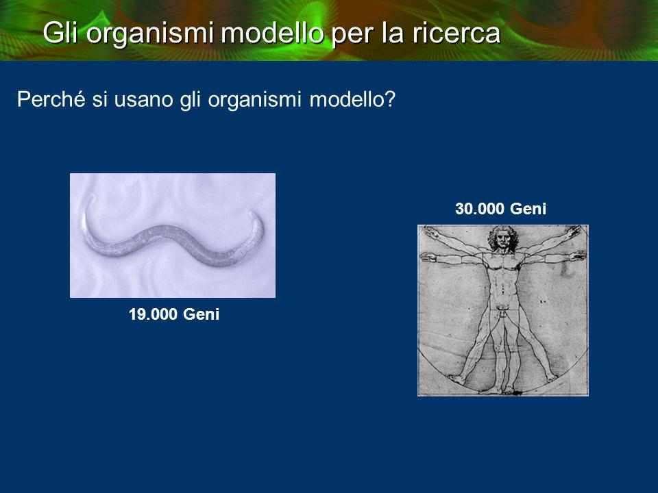 Perché si usano gli organismi modello