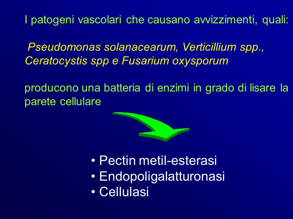 Pectin metil-esterasi Endopoligalatturonasi Cellulasi