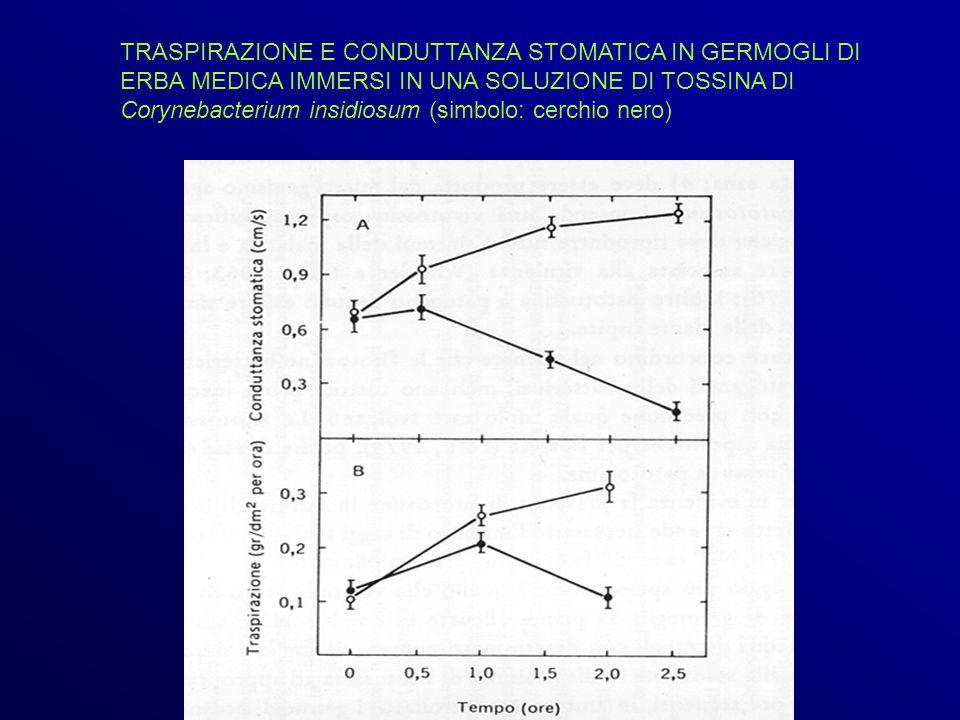 TRASPIRAZIONE E CONDUTTANZA STOMATICA IN GERMOGLI DI ERBA MEDICA IMMERSI IN UNA SOLUZIONE DI TOSSINA DI Corynebacterium insidiosum (simbolo: cerchio nero)