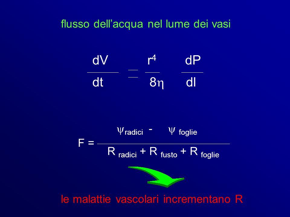 dV r4 dP dt 8 dl flusso dell'acqua nel lume dei vasi