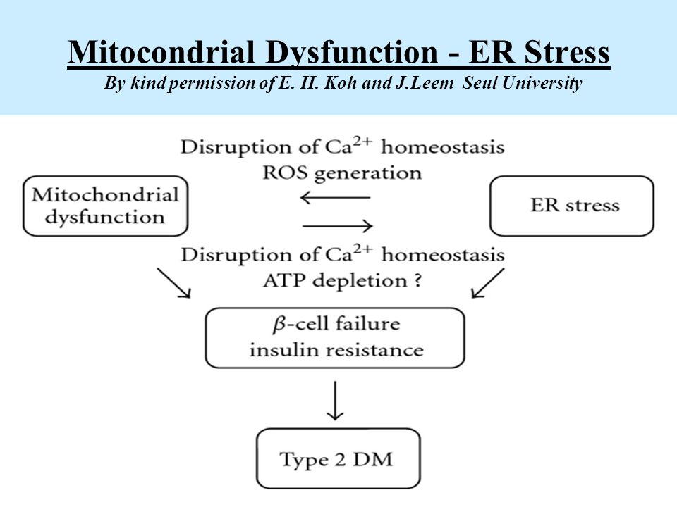 Mitocondrial Dysfunction - ER Stress By kind permission of E. H