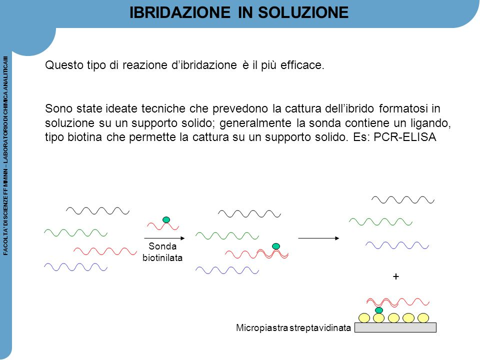Micropiastra streptavidinata