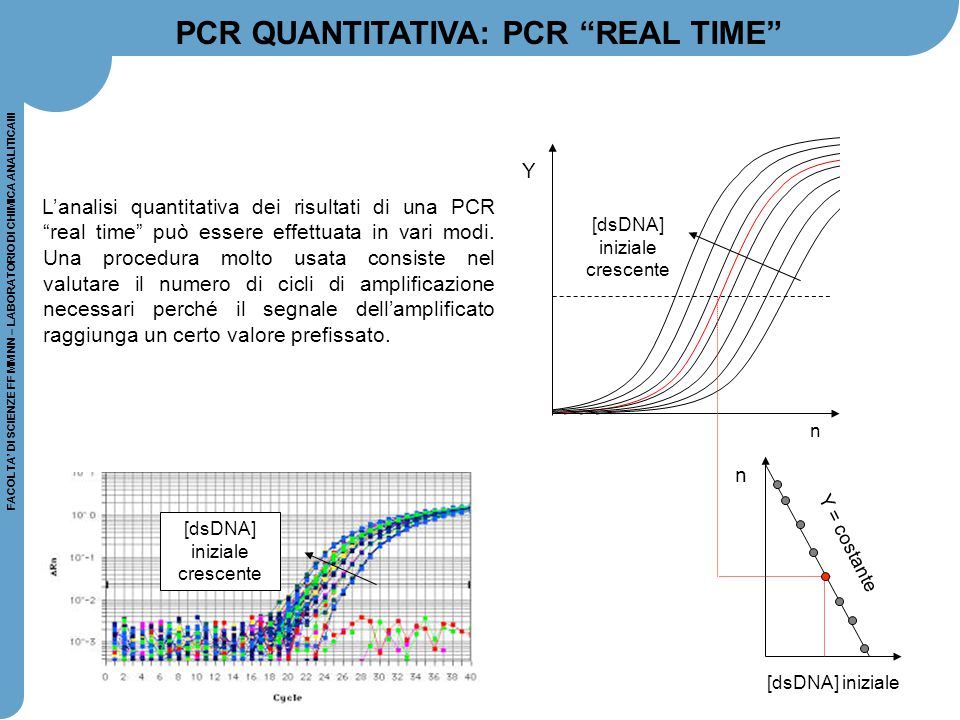 PCR QUANTITATIVA: PCR REAL TIME