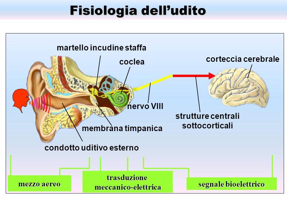 Fisiologia dell'udito