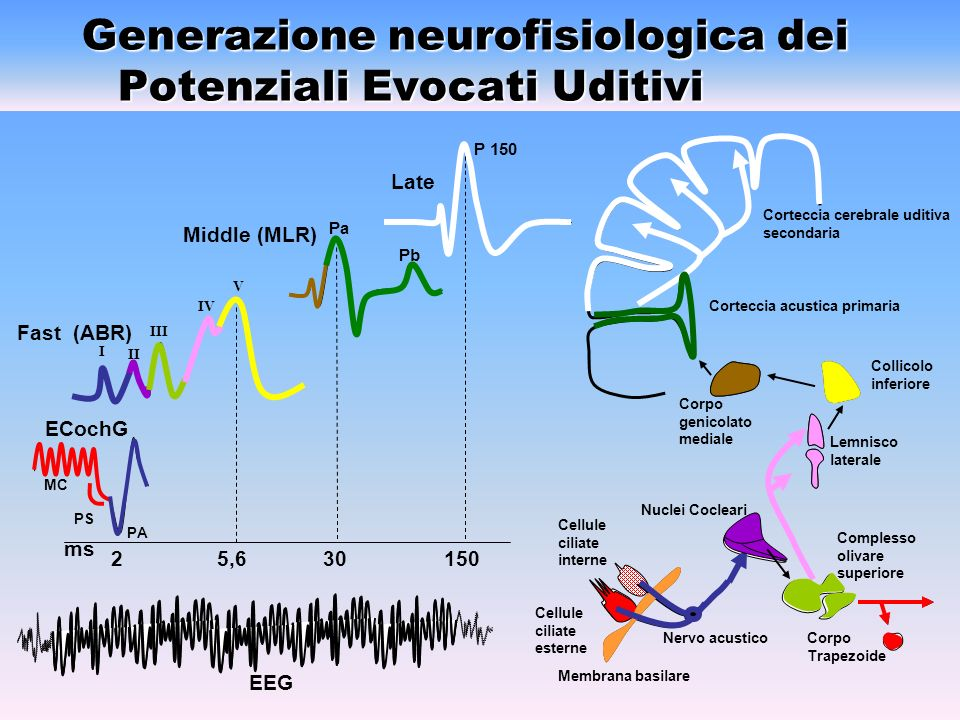 Generazione neurofisiologica dei Potenziali Evocati Uditivi