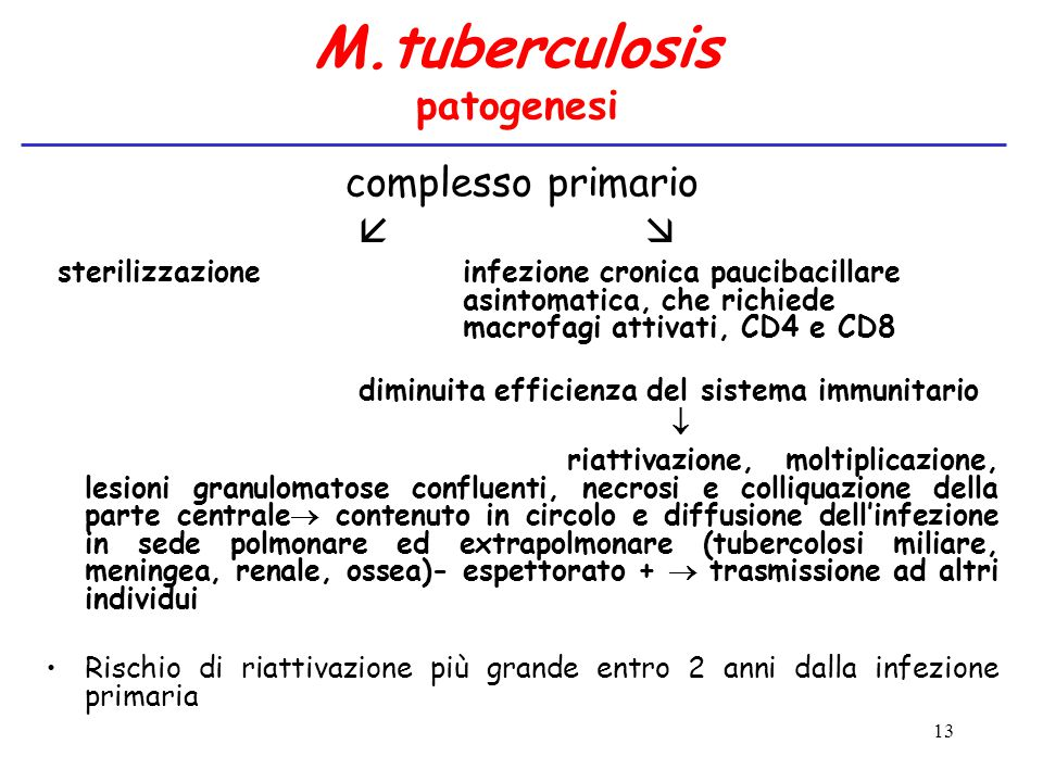 M.tuberculosis patogenesi
