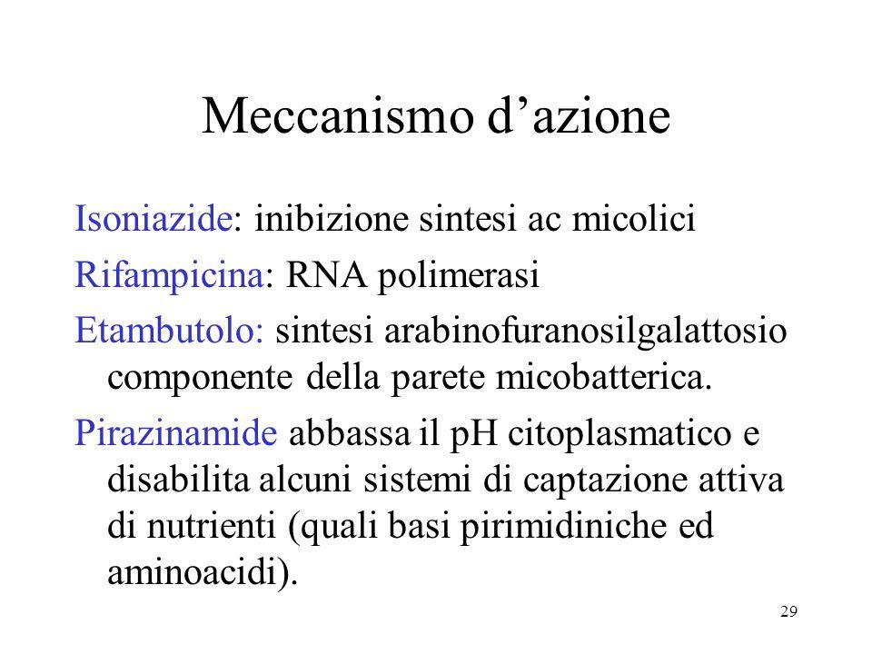 Meccanismo d'azione Isoniazide: inibizione sintesi ac micolici