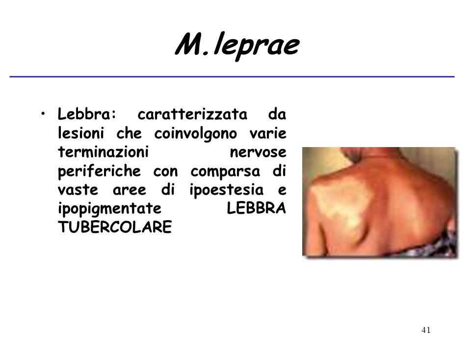 M.leprae