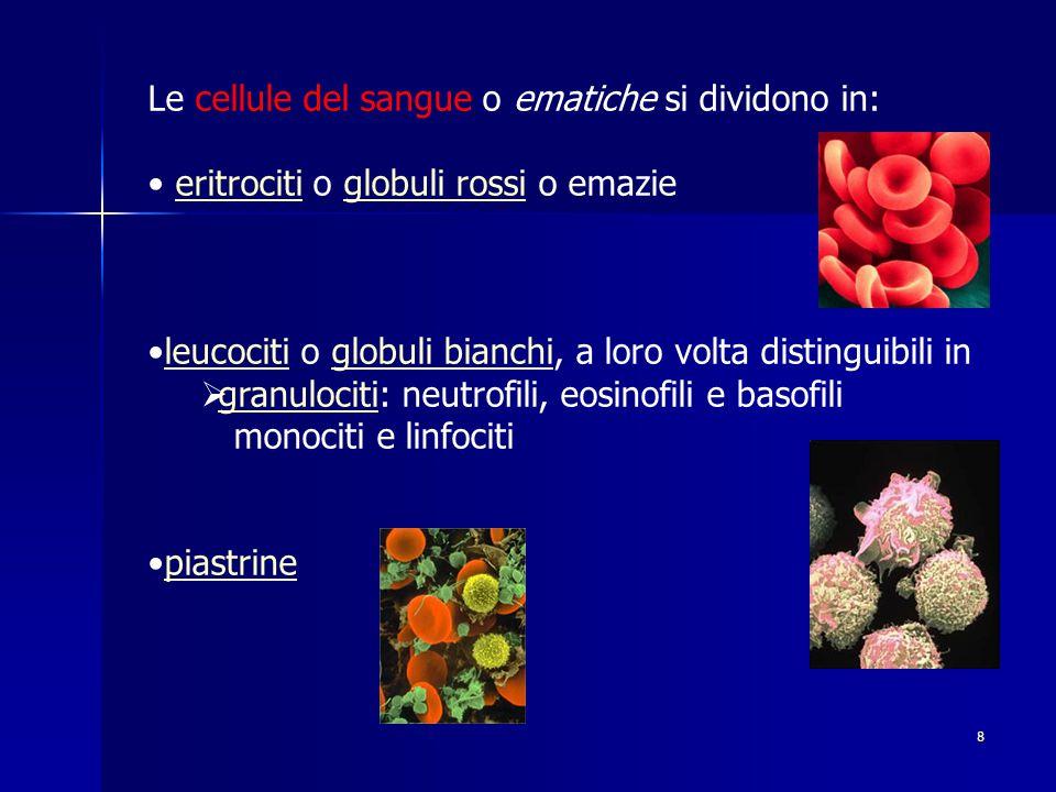 Le cellule del sangue o ematiche si dividono in: