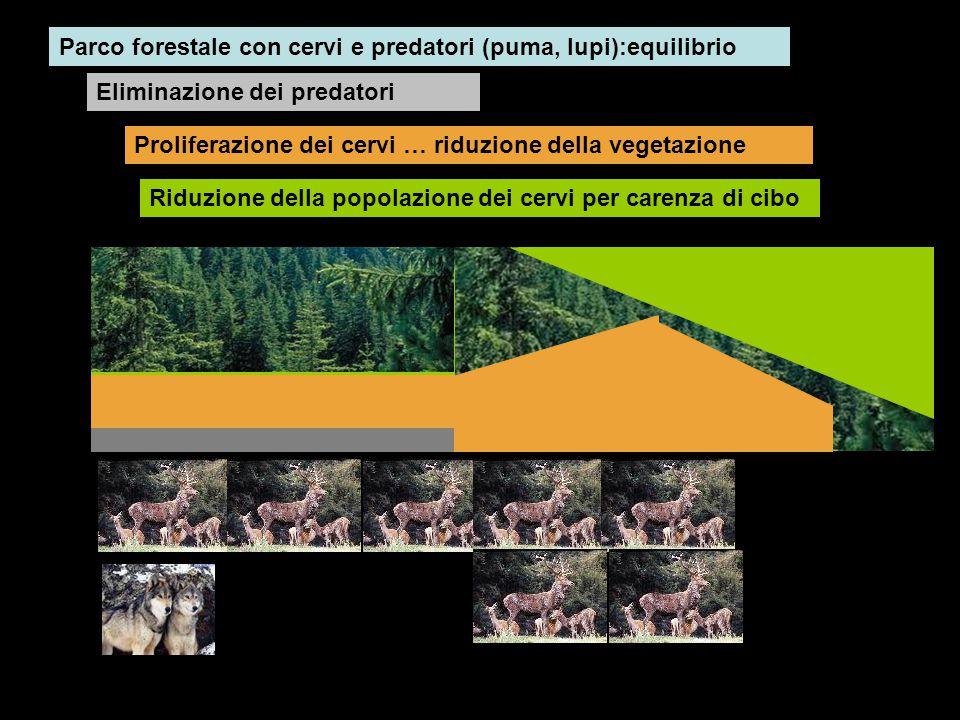 Parco forestale con cervi e predatori (puma, lupi):equilibrio