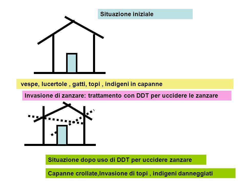 Situazione iniziale vespe, lucertole , gatti, topi , indigeni in capanne. Invasione di zanzare: trattamento con DDT per uccidere le zanzare.