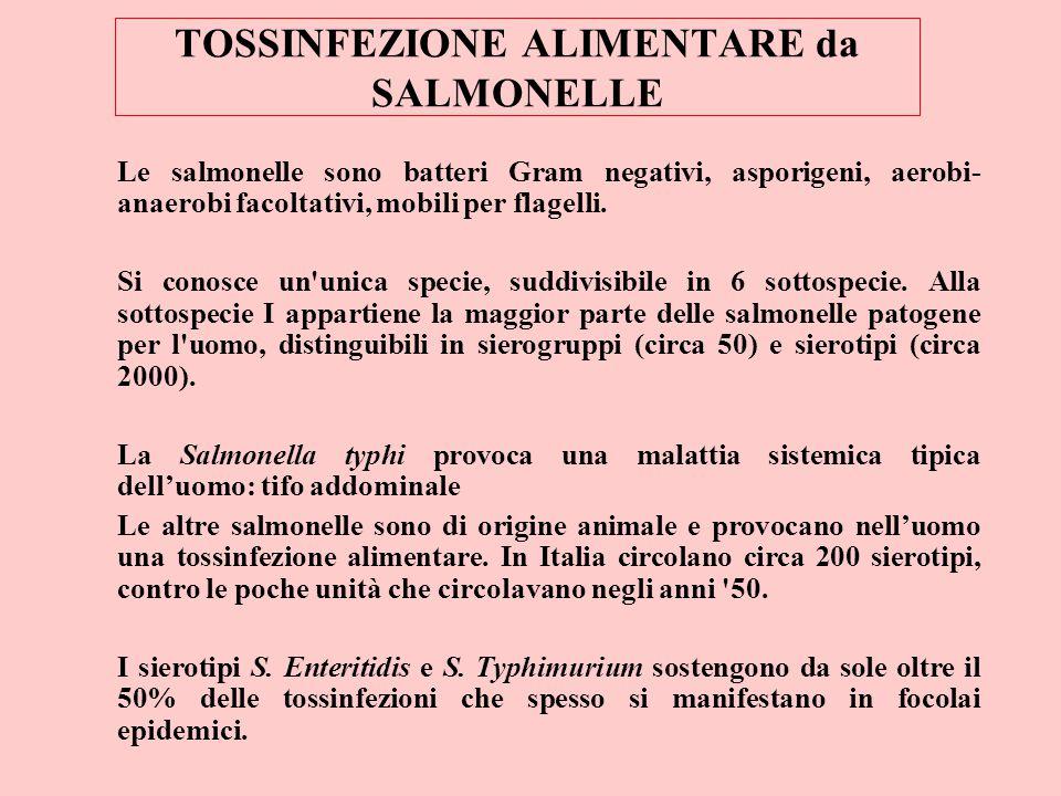TOSSINFEZIONE ALIMENTARE da SALMONELLE