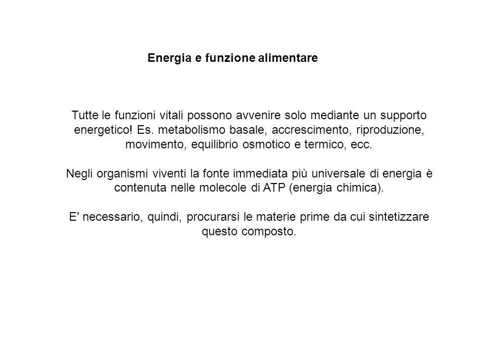 Energia e funzione alimentare