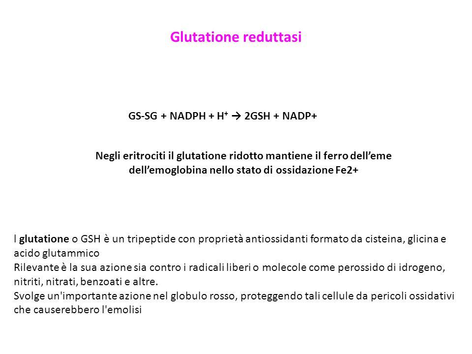 Glutatione reduttasi GS-SG + NADPH + H+ → 2GSH + NADP+