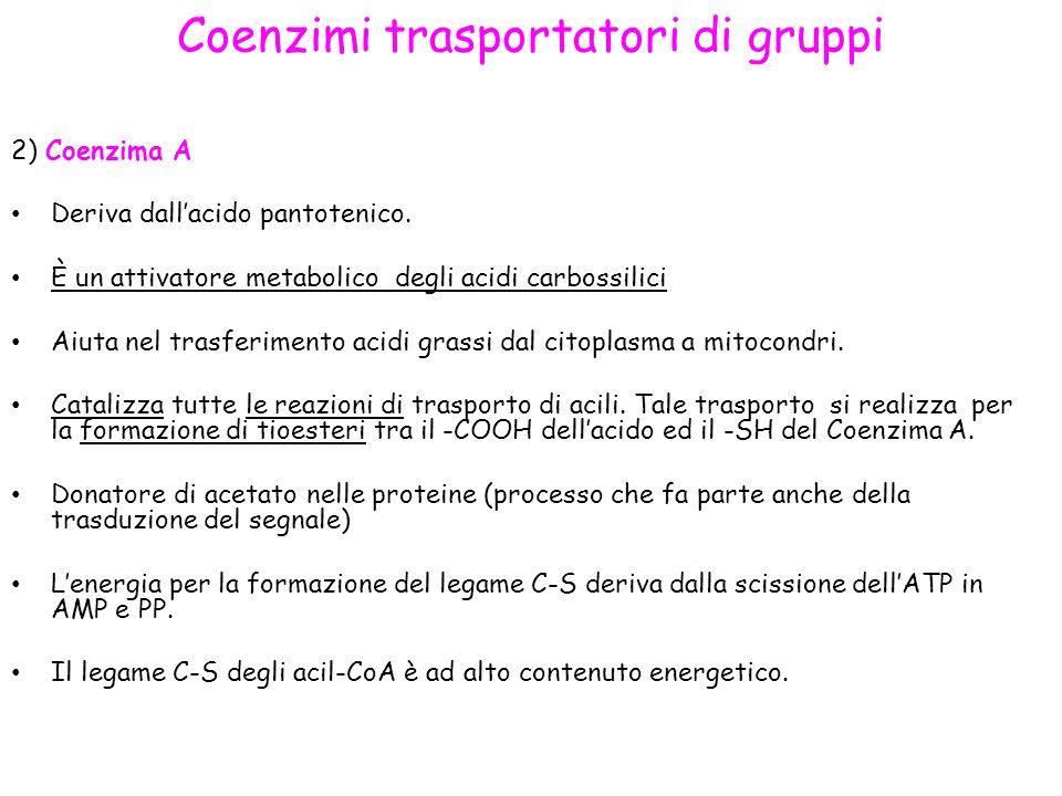 Coenzimi trasportatori di gruppi