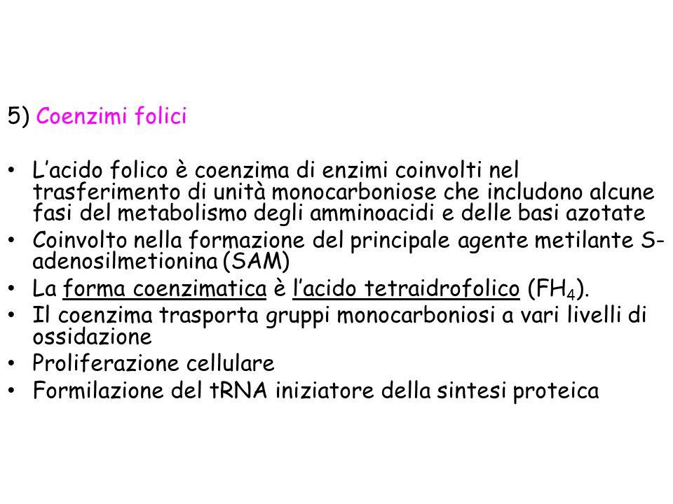 5) Coenzimi folici
