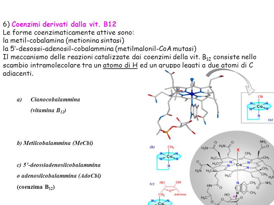 6) Coenzimi derivati dalla vit. B12