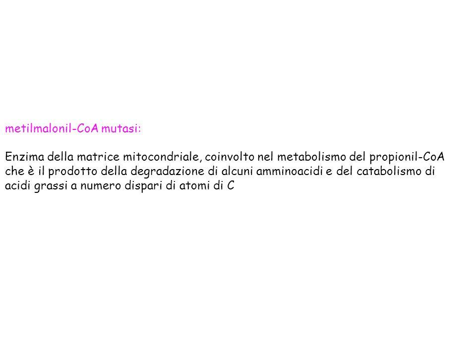 metilmalonil-CoA mutasi: