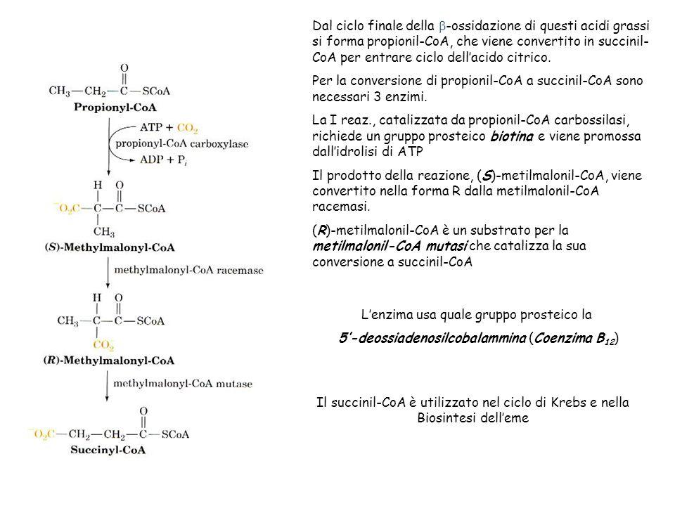 L'enzima usa quale gruppo prosteico la