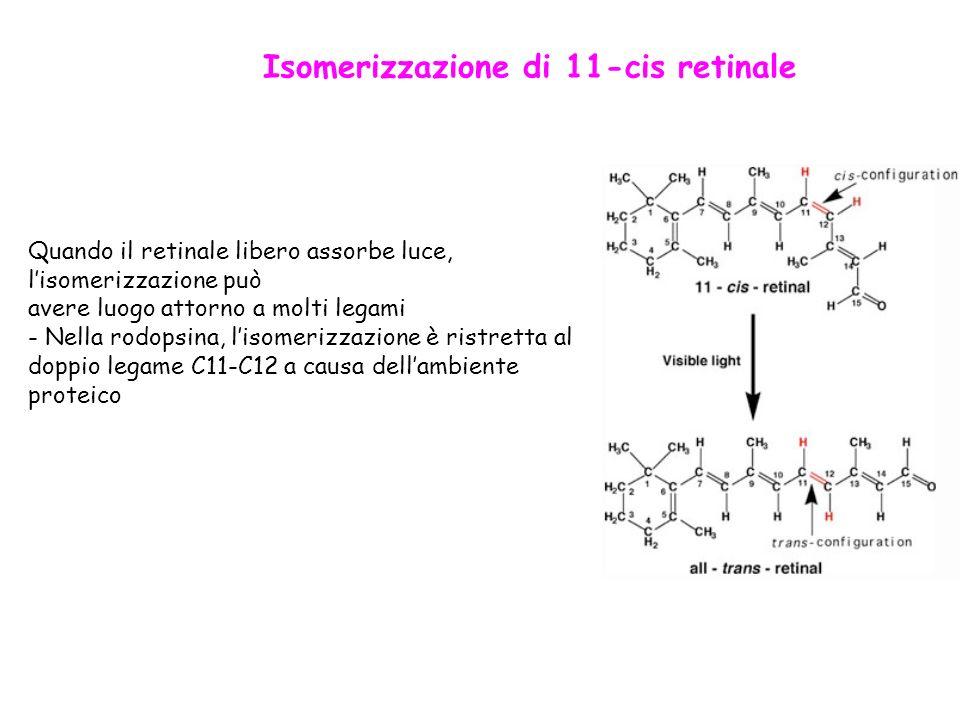 Isomerizzazione di 11-cis retinale