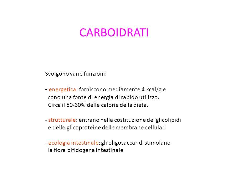 CARBOIDRATI energetica: forniscono mediamente 4 kcal/g e