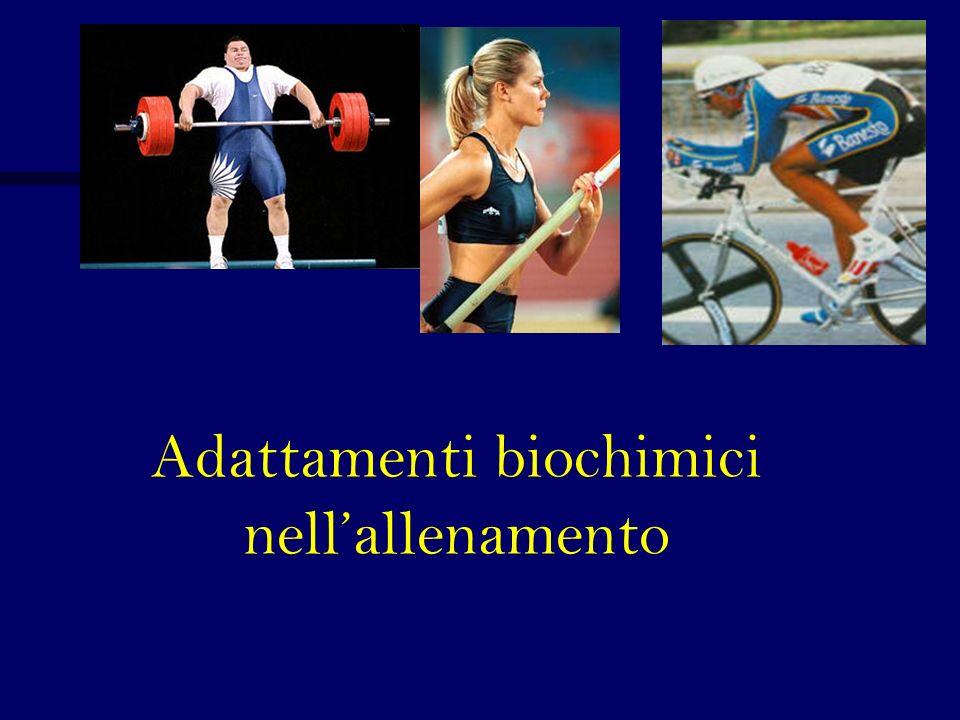 Adattamenti biochimici nell'allenamento