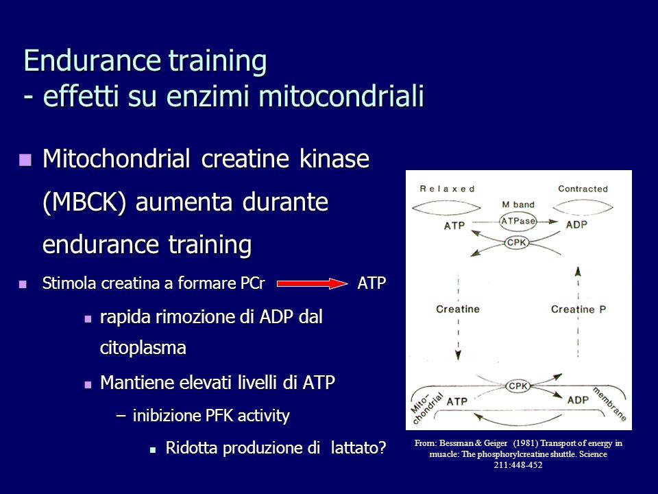 Endurance training - effetti su enzimi mitocondriali