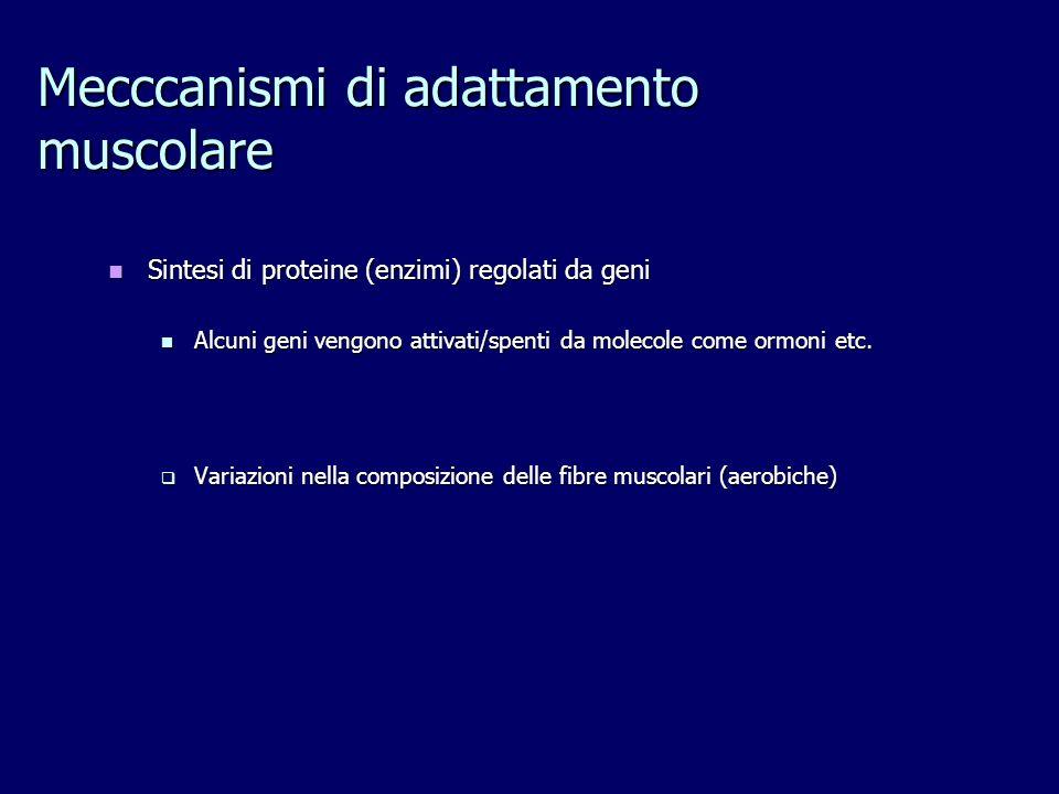 Mecccanismi di adattamento muscolare