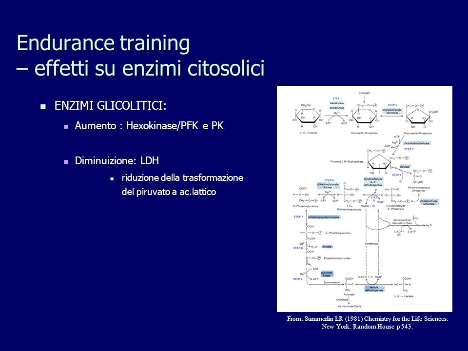 Endurance training – effetti su enzimi citosolici