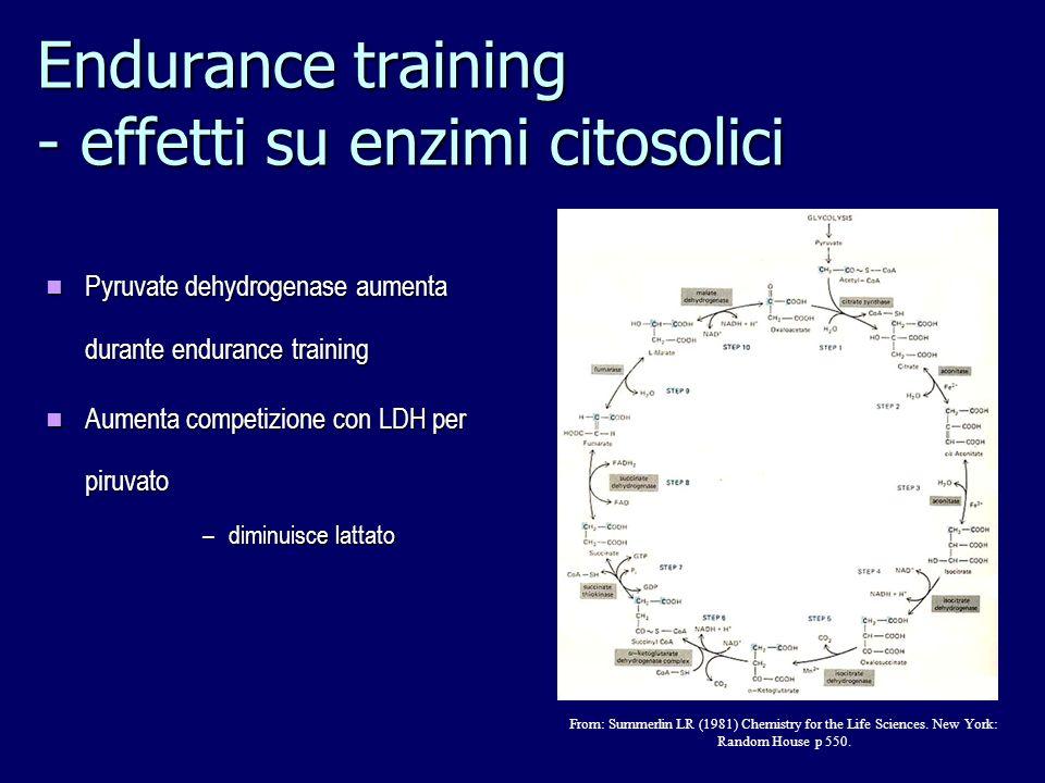 Endurance training - effetti su enzimi citosolici
