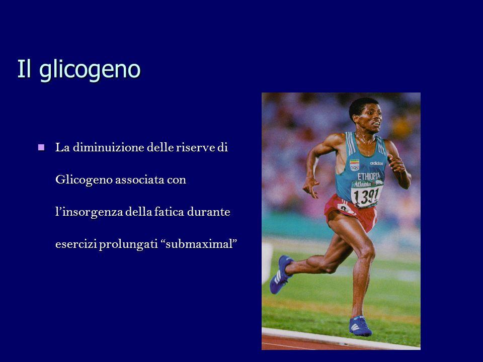 Il glicogeno La diminuizione delle riserve di Glicogeno associata con l'insorgenza della fatica durante esercizi prolungati submaximal