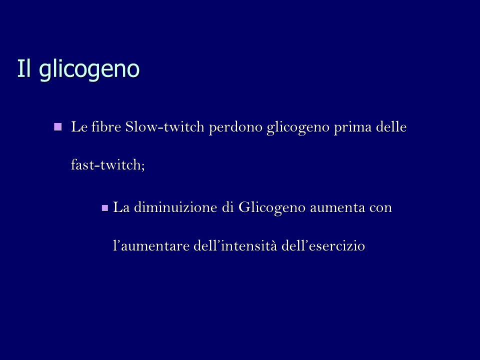 Il glicogeno Le fibre Slow-twitch perdono glicogeno prima delle fast-twitch;