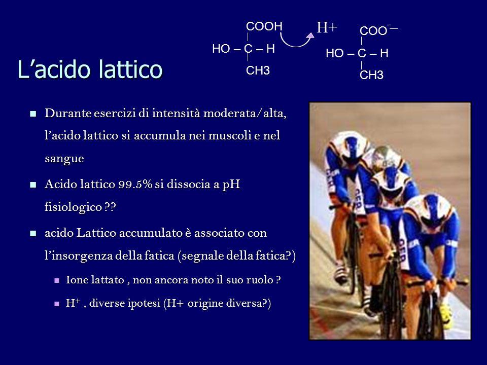 COOH HO – C – H. CH3. H+ COO- HO – C – H. CH3. L'acido lattico.