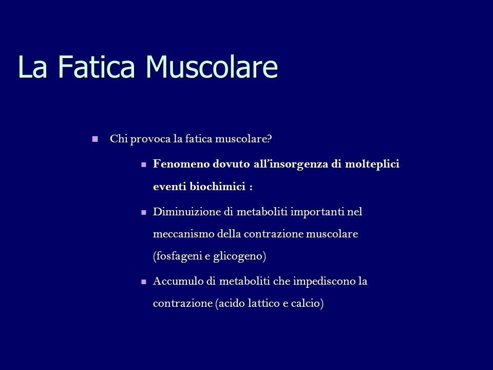 La Fatica Muscolare Chi provoca la fatica muscolare