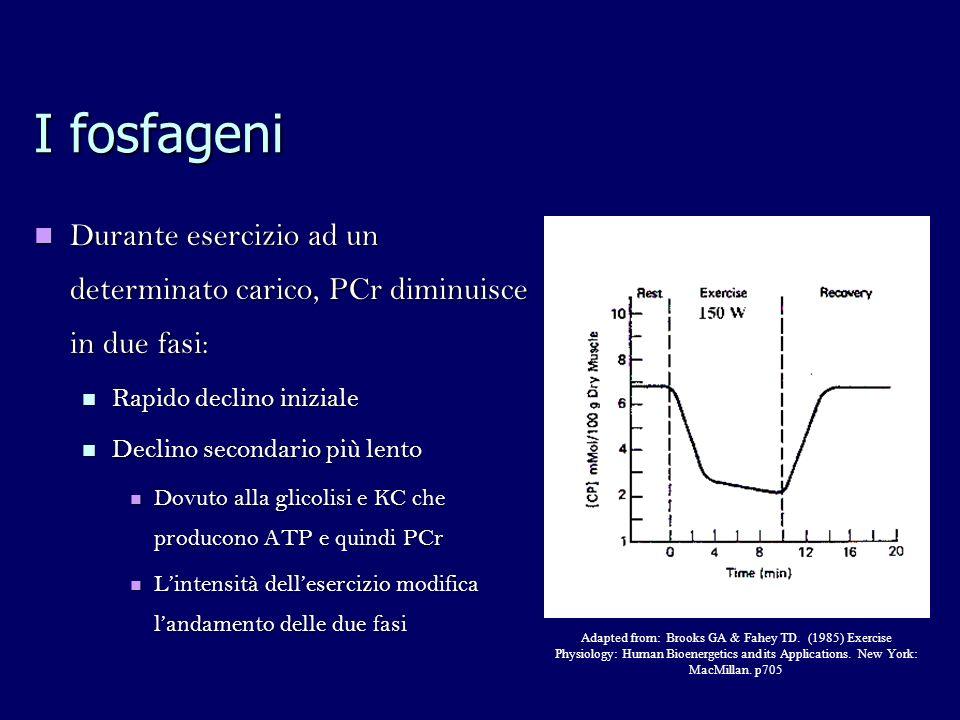 I fosfageni Durante esercizio ad un determinato carico, PCr diminuisce in due fasi: Rapido declino iniziale.