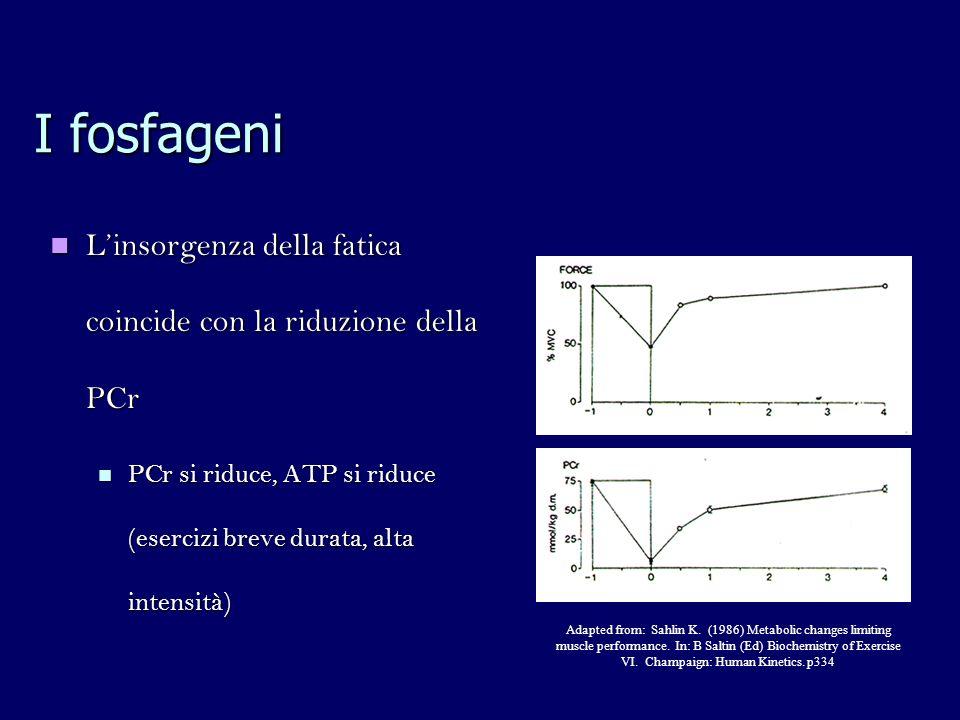 I fosfageni L'insorgenza della fatica coincide con la riduzione della PCr. PCr si riduce, ATP si riduce (esercizi breve durata, alta intensità)